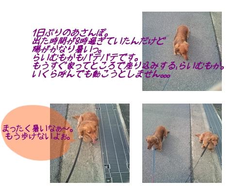 5月20日あさんぽ.jpg