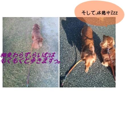 お散歩2.jpg