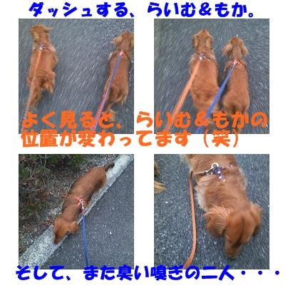 お散歩風景.jpg