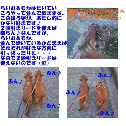 お散歩風景2.jpg