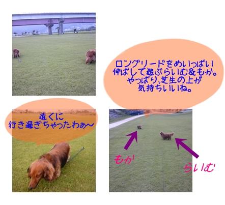 お誕生日のお散歩.jpg
