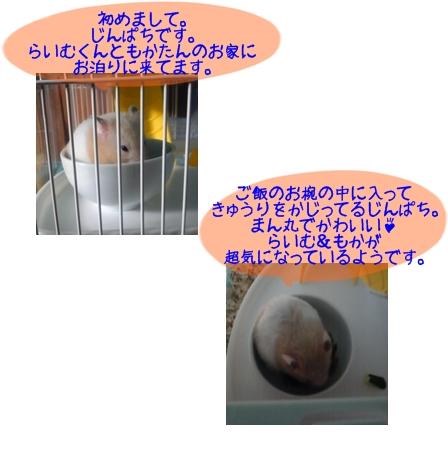 じんぱち.jpg