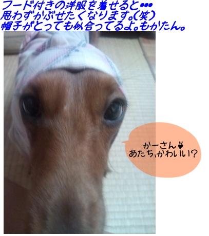 もかたんあっぷ.jpg