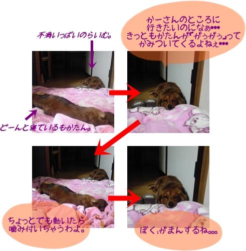 らいむともかの関係.jpg