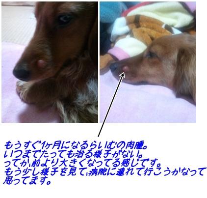 らいむのお鼻.jpg