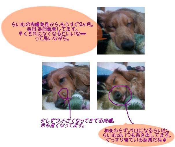 らいむの寝顔.jpg