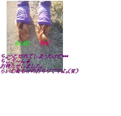 らいむもかのおちり.jpg