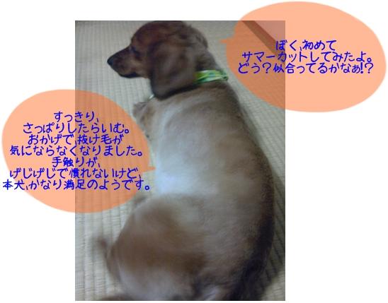 サマーカット.jpg