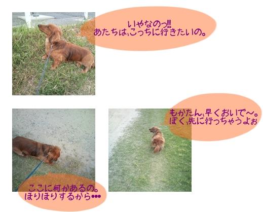5月18日あさんぽ.jpg