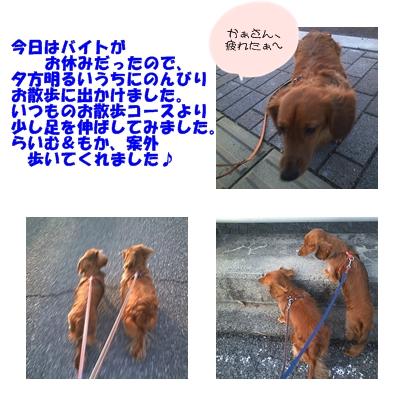 ある日のお散歩2.jpg