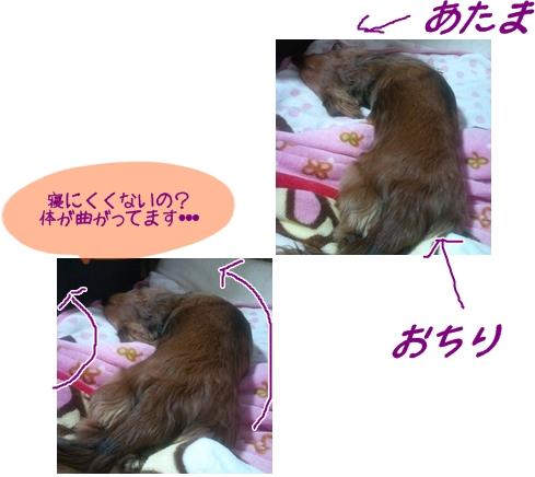 もかの寝相.jpg