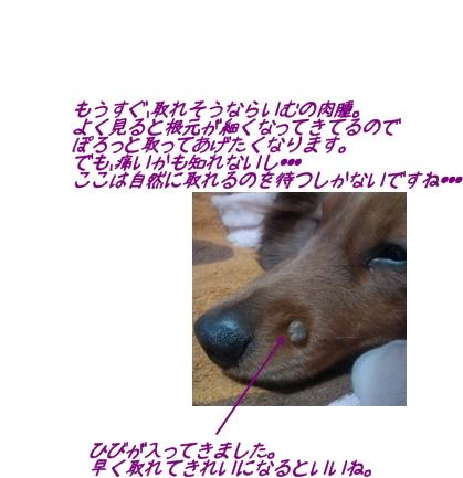 らいむ1.jpg